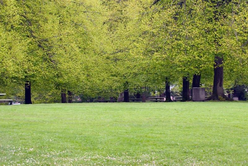Frühlings-Park stockfoto