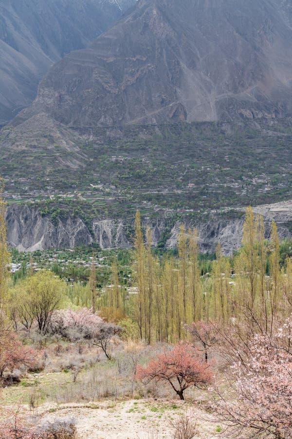 Frühlings-Saison, Blumenblüte an Hunza-Tal und Dorf in Pakistan lizenzfreie stockfotografie