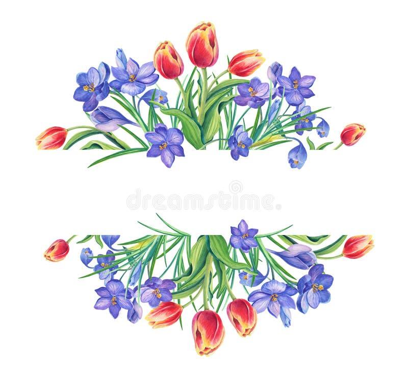 Frühlings-schöne Tulpen, violetter Krokus oder Safran auf weißem Hintergrund Dekoratives Bild einer Flugwesenschwalbe ein Blatt P vektor abbildung