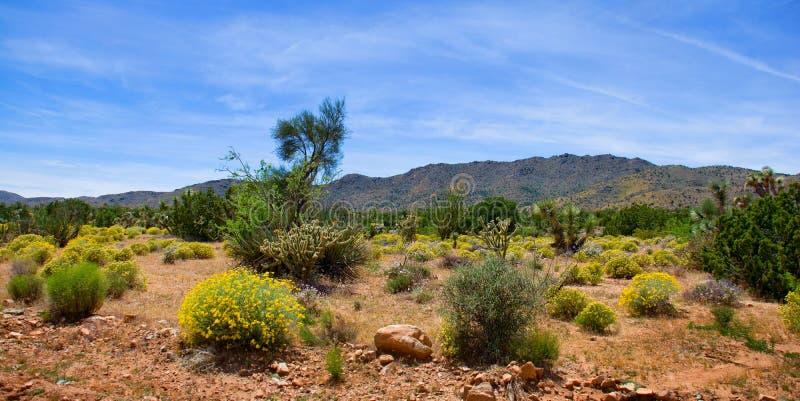 Frühlings-Wüsten-Blüte in Arizona lizenzfreie stockfotografie