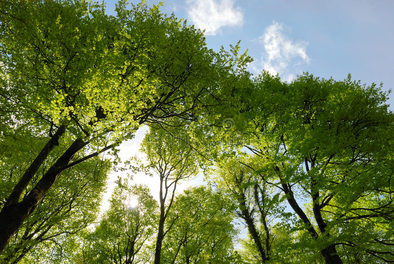 Frühlings-Waldland stockbilder