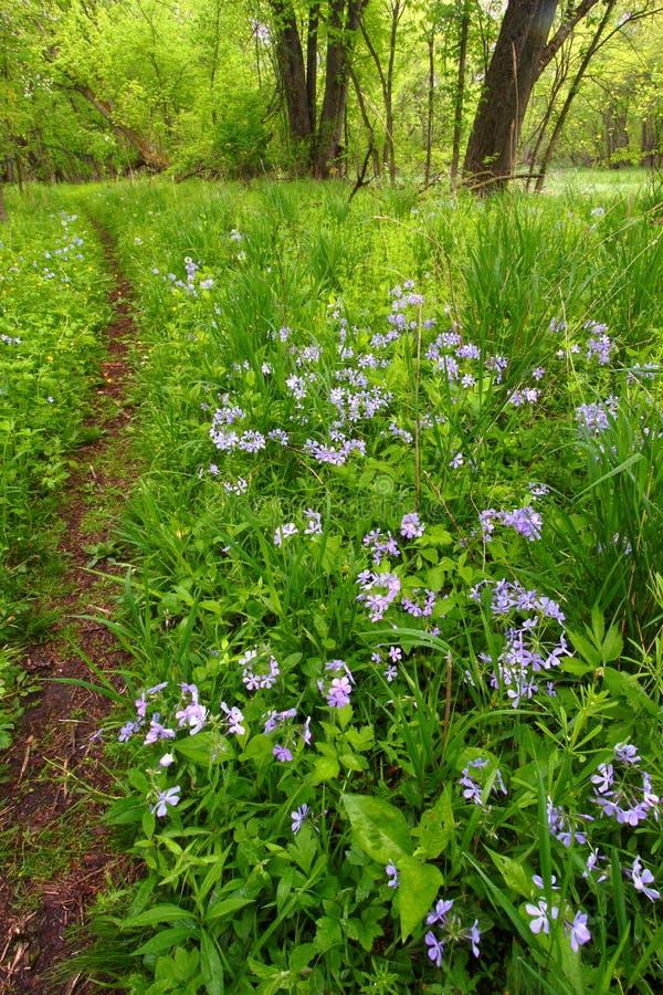 Frühlings-Waldlaub Illinois