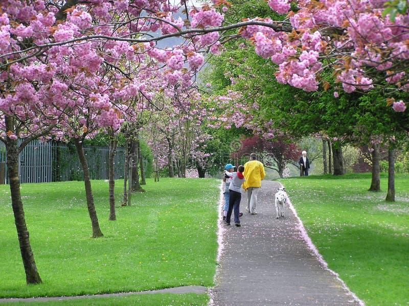 Frühlings-Weg stockbilder