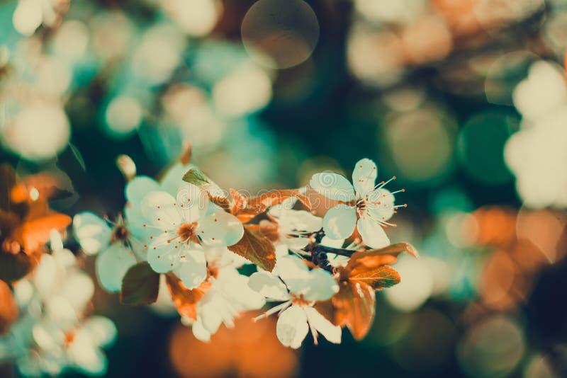 Frühlings-Weiß-blühende Bäume Retro- Stockbild - Bild von frühling ...