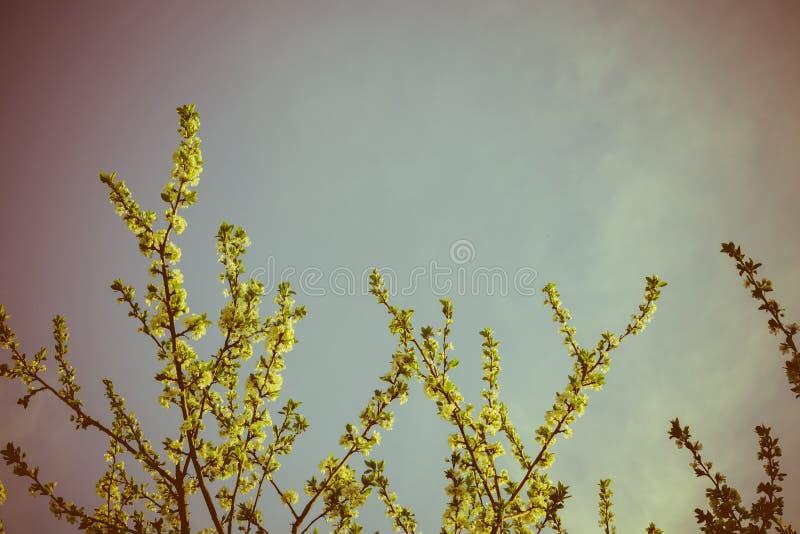 Frühlings-Weiß-blühende Bäume Retro- Stockfoto - Bild von grün ...