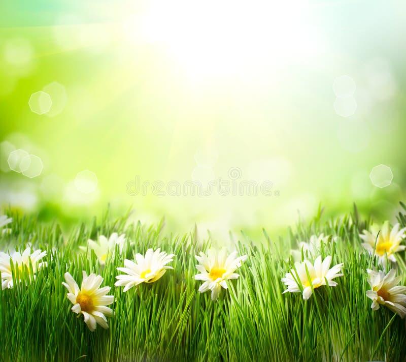 Frühlings-Wiese mit Gänseblümchen stockfoto
