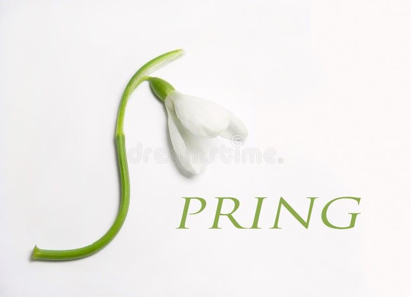 Frühlings-Zeichen lizenzfreie stockfotos