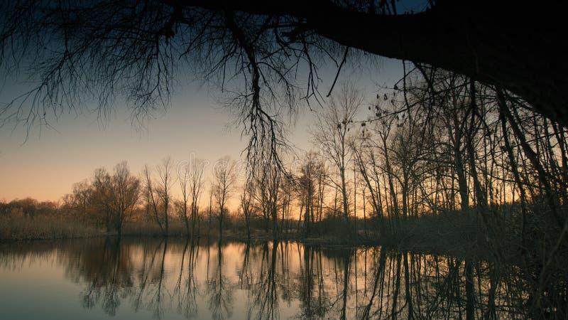 Frühlingsabendwald und -see lizenzfreie stockfotos