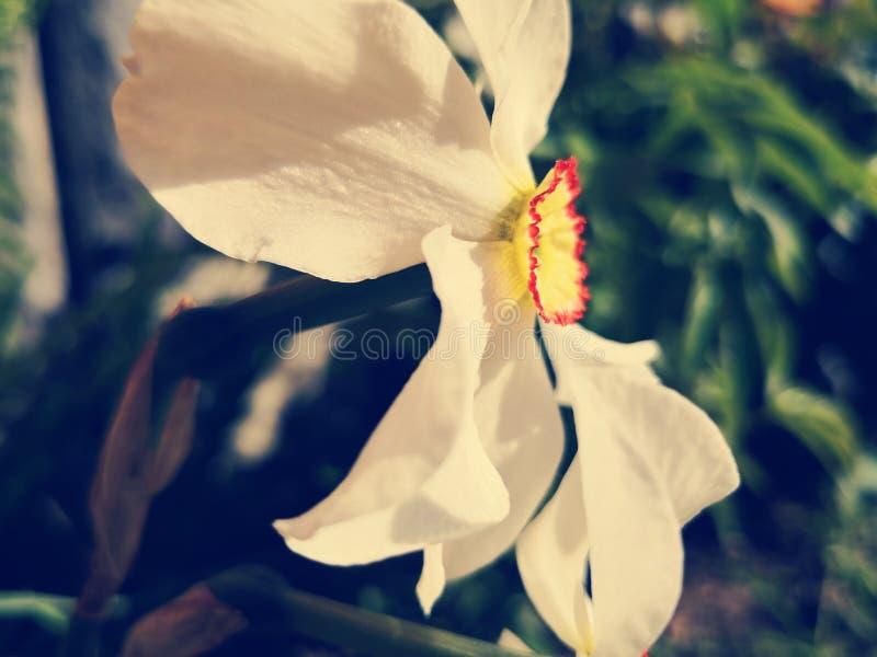 Frühlingsansicht stockfotos