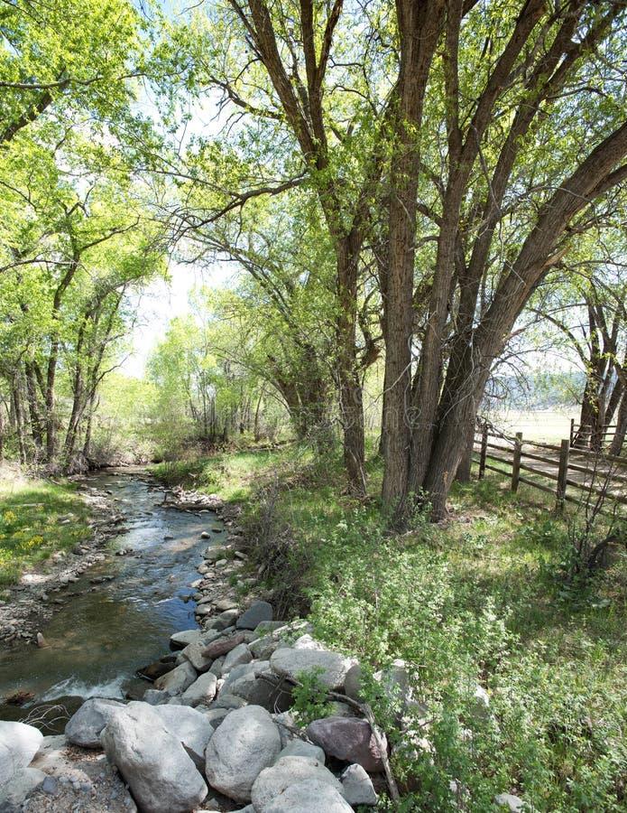 Frühlingsbäume, grünes Gras, Landschaftlandschaft, Blütenbaumobstgarten lizenzfreies stockfoto