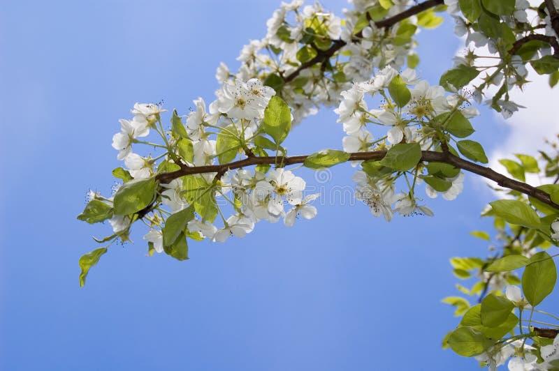 Frühlingsbaum mit Blumen stockbild