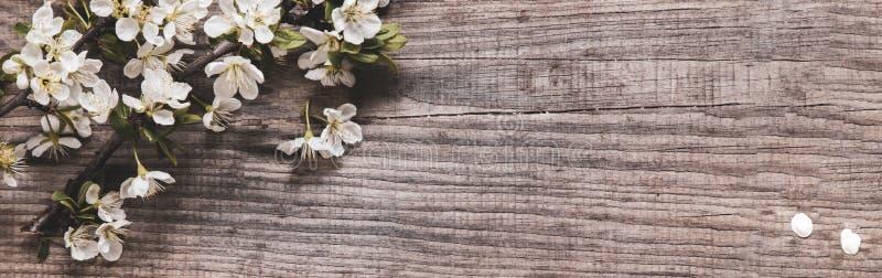 Frühlingsbaumblumen im Hintergrund alter Vintage-Tafel stockfoto