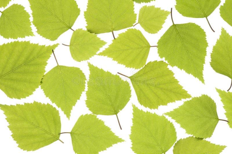Frühlingsblätter lizenzfreie stockfotos