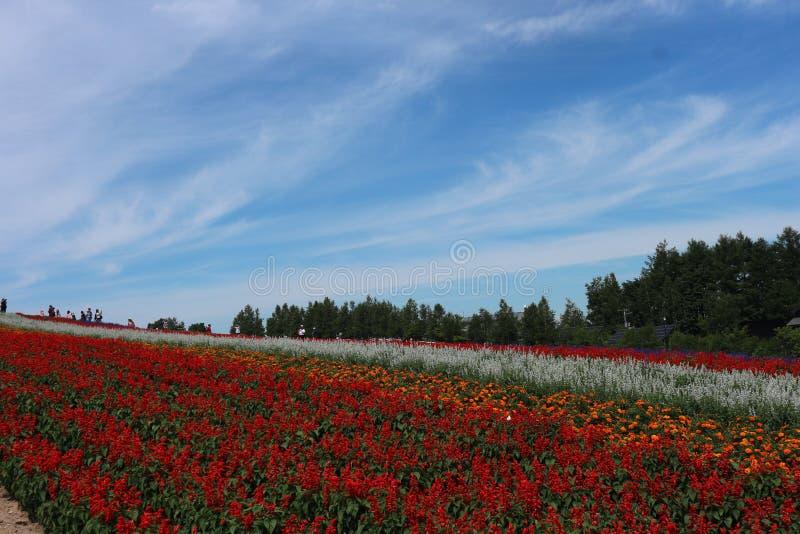 Frühlingsblühen der bunten Blumen und der Bäume auf dem Hintergrund des blauen Himmels bei Supporo stockfoto