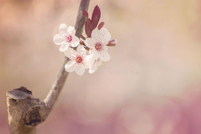 Frühlingsblüte lizenzfreie stockfotografie