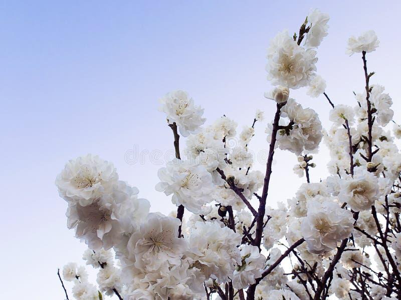 Frühlingsblüte in einem Baum lizenzfreie stockbilder