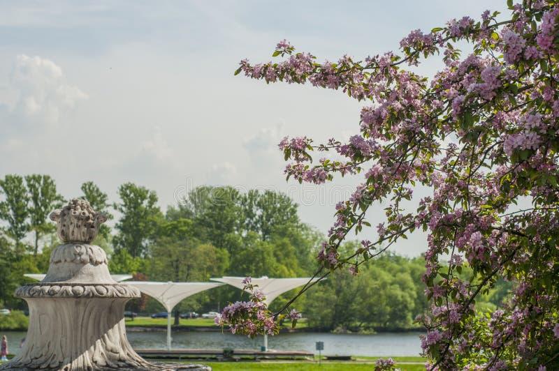 Frühlingsblüten an einem sonnigen Tag in einem Park nahe Fluss Blühender Baum und weiße Skulptur stockfotografie