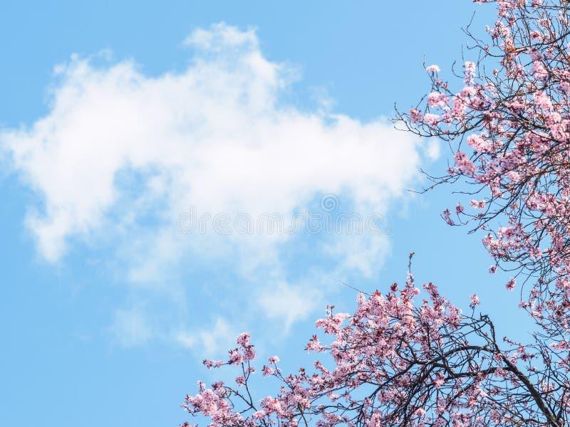 Frühlingsblüten und -himmel stockfotografie