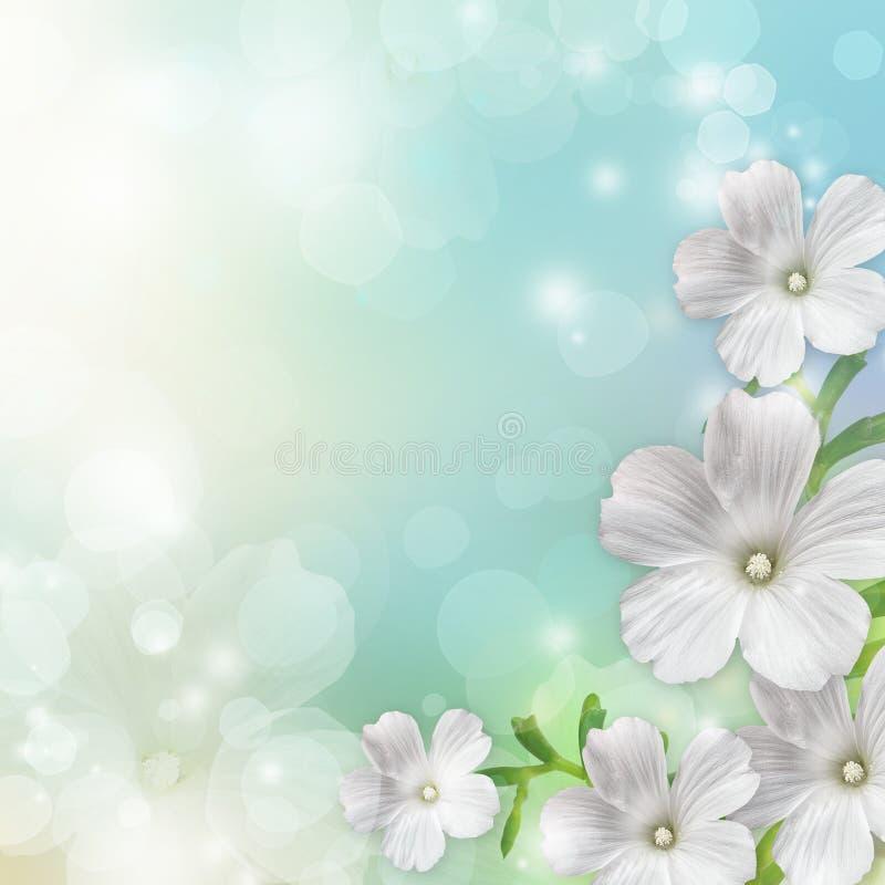 Frühlingsblütenhintergrund lizenzfreie abbildung