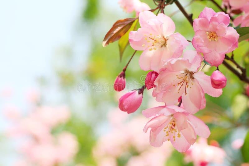 Frühlingsblume lizenzfreie stockfotografie
