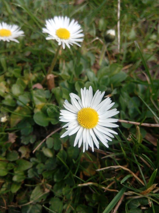Frühlingsblume auf dem Gebiet stockfoto