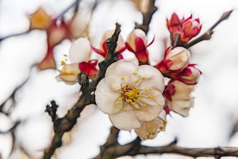 Frühlingsblumen auf Baumasten in der Natur stockbild