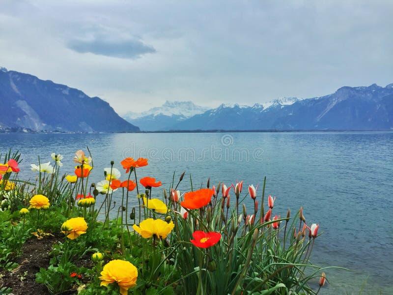 Frühlingsblumen in den Alpen stockfotos