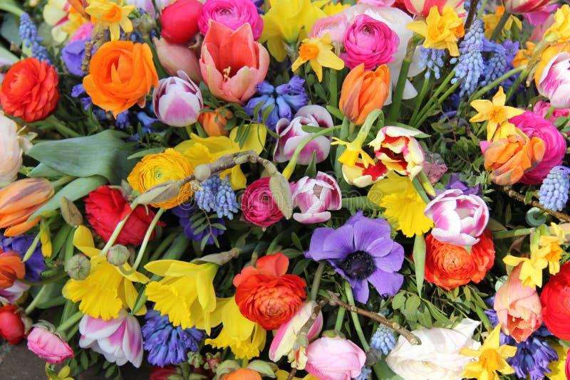 Frühlingsblumen in den hellen Farben lizenzfreies stockfoto