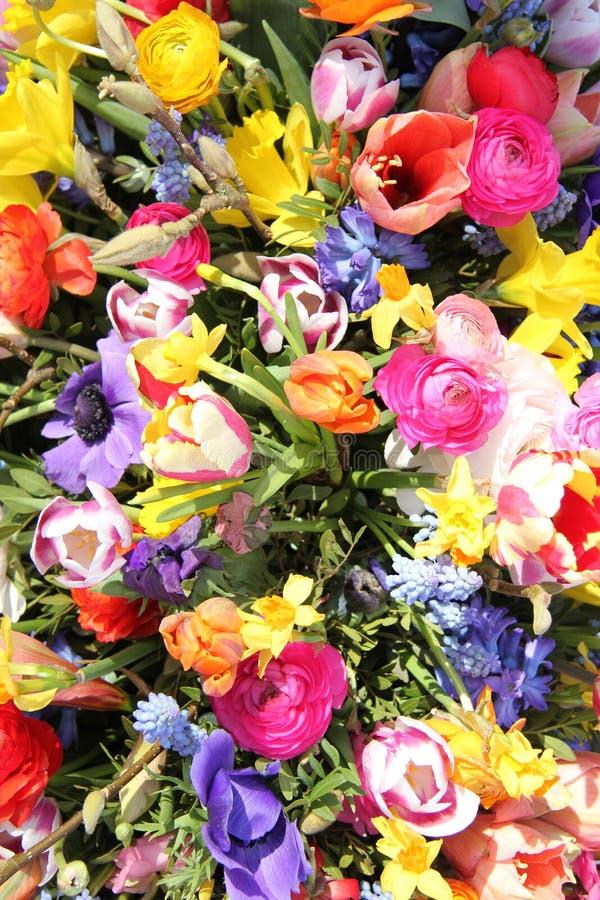Frühlingsblumen in den hellen Farben lizenzfreies stockbild