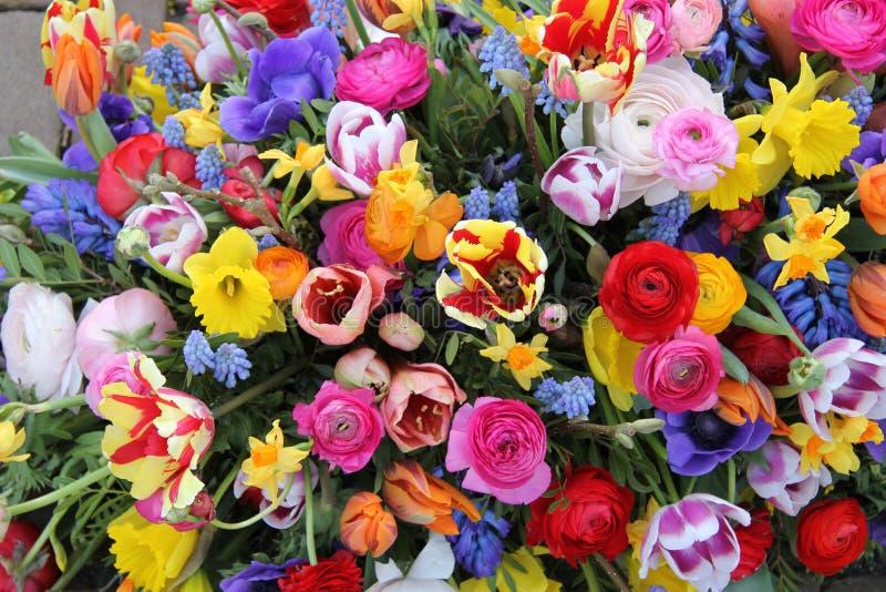 Frühlingsblumen in den hellen Farben lizenzfreie stockfotografie