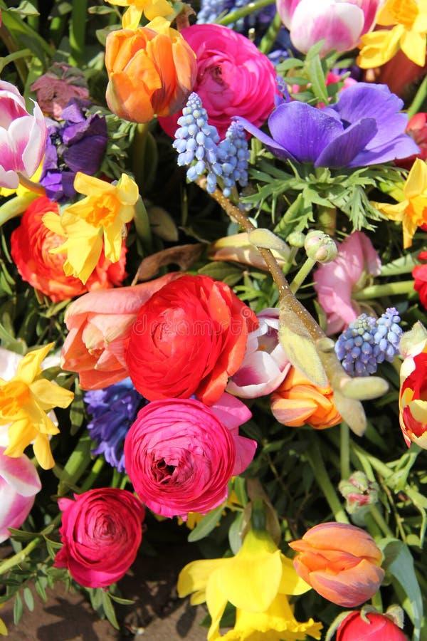 Frühlingsblumen in den hellen Farben stockfotos