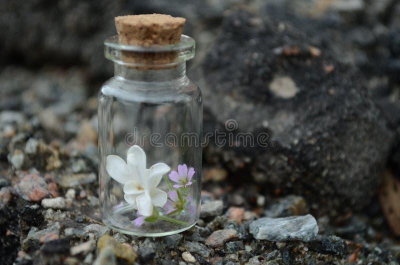 Frühlingsblumen in einem kleinen Glas stockfotografie