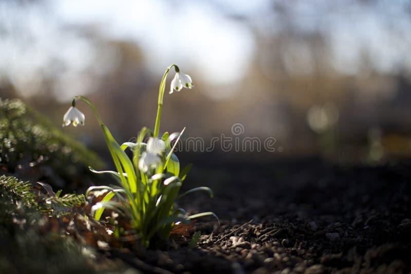 Frühlingsblumen in einem Park stockfoto