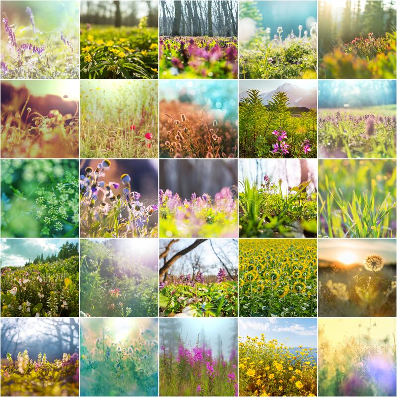 Frühlingsblumen stockfotografie