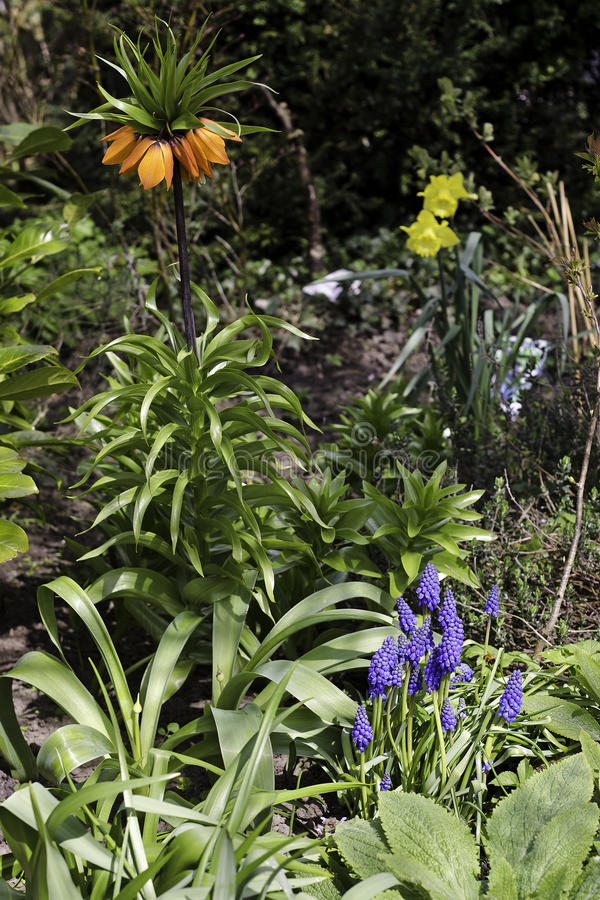 Frühlingsblumen im Garten stockbild