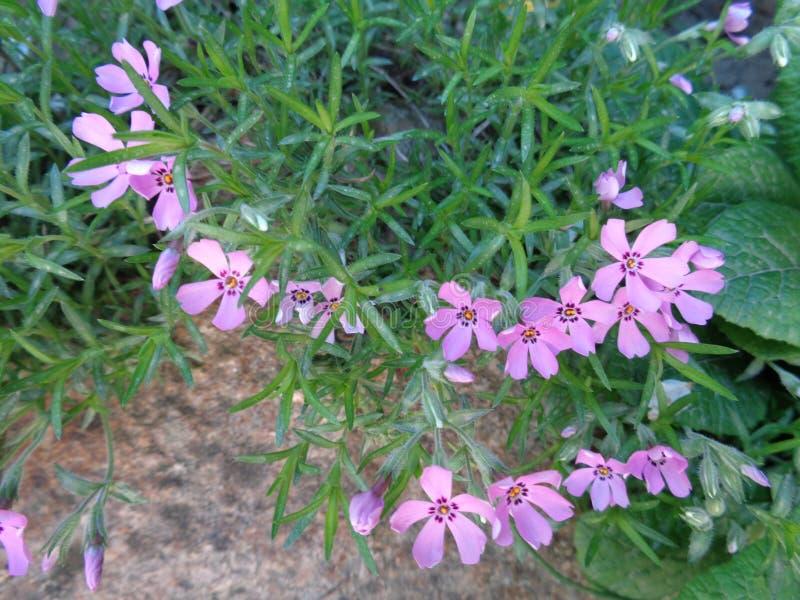 Frühlingsblumen mit Steinhintergrund lizenzfreie stockfotos