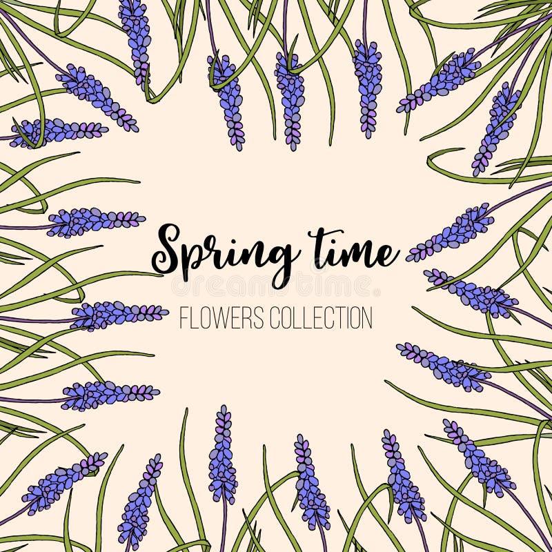 Frühlingsblumen Muscarirahmen lizenzfreie abbildung