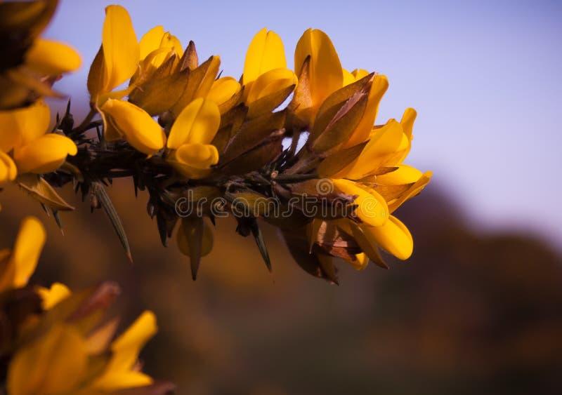 Frühlingsblumen in Süd-England stockbild