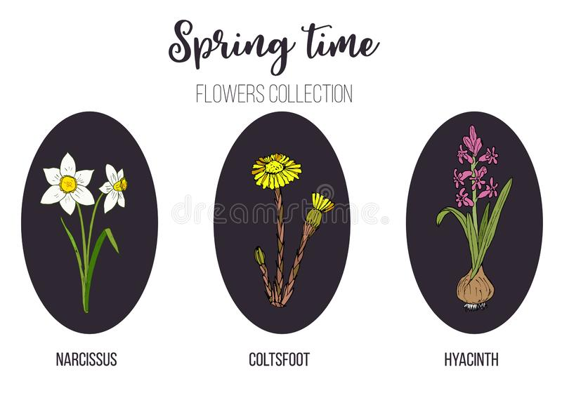 Frühlingsblumen stellten Coltsfoot, Hyazinthe, Narzisse ein lizenzfreie abbildung