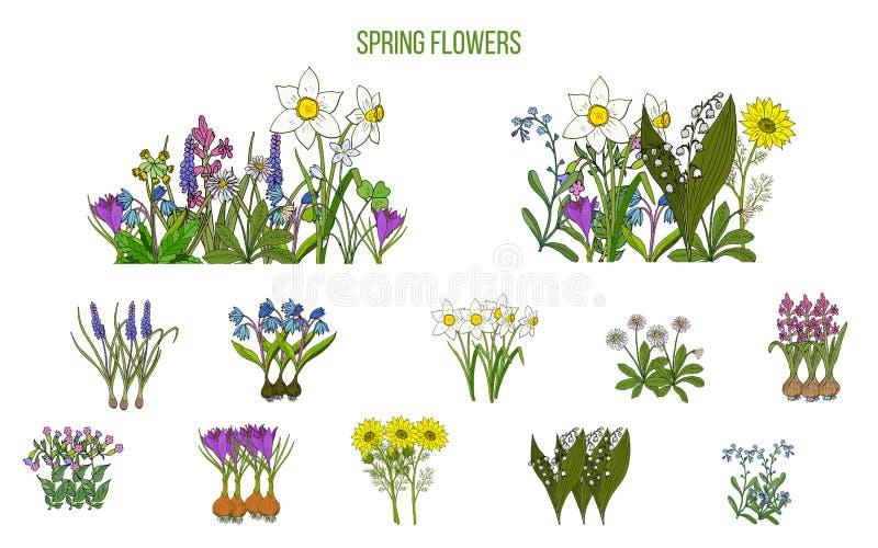 Frühlingsblumen stellten Krokus, scilla, Primel ein lizenzfreie abbildung
