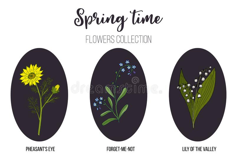 Frühlingsblumen stellten Maiglöckchen, Fasanauge, Vergissmeinnicht ein stock abbildung