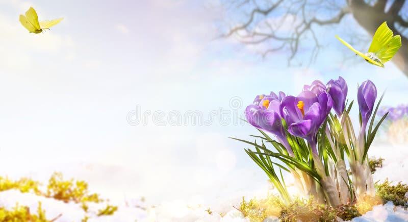 Frühlingsblumen und Flugschmetterling auf Frühlingswiesenhintergrund; stockbilder