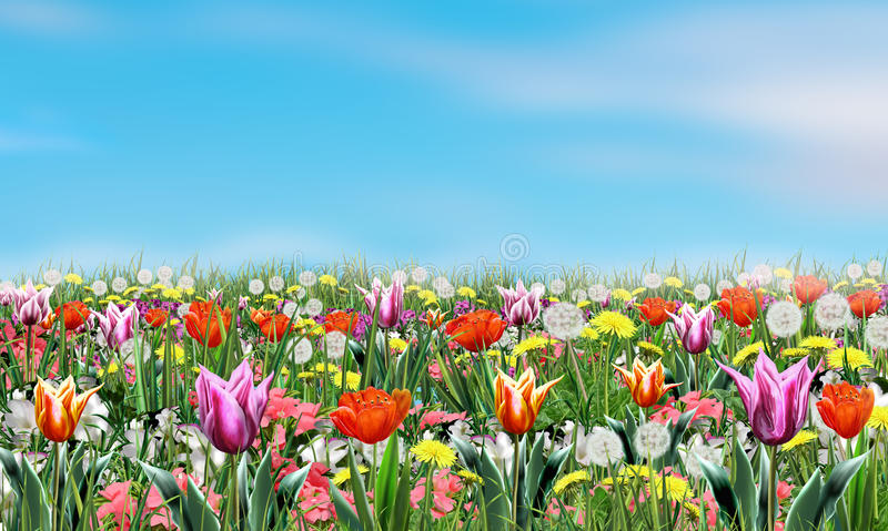 Frühlingsblumen und -himmel stock abbildung