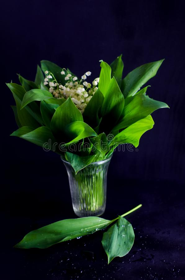 Frühlingsblumen und Maiglöckchenblätter auf Schwarzem stockfotografie