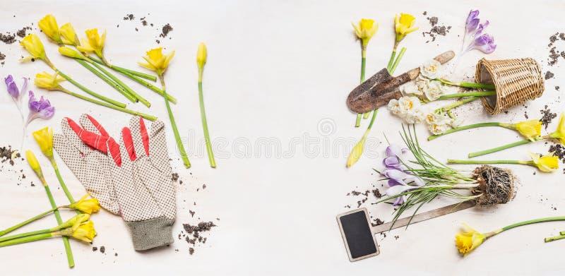 Frühlingsblumen und -töpfe, Gartenwerkzeuge und Arbeitshandschuhe auf weißem hölzernem Hintergrund, Draufsicht lizenzfreies stockbild