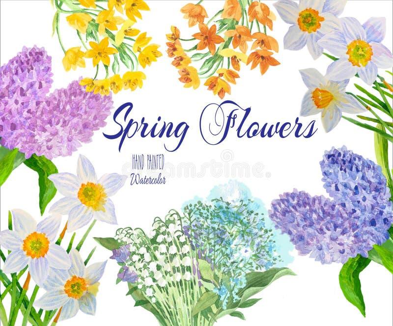 Frühlingsblumen vom Garten vektor abbildung
