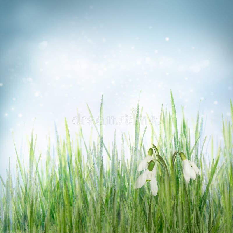 Frühlingsblumenhintergrund mit snowdrop Blumen lizenzfreies stockfoto