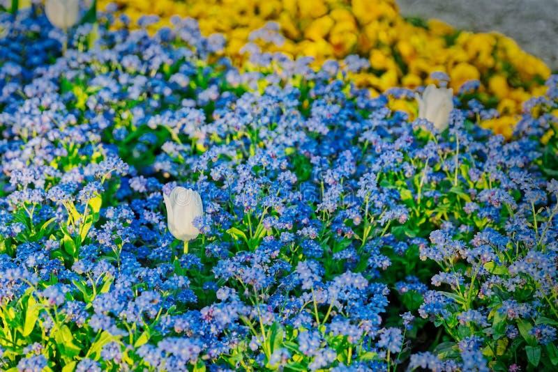Frühlingsblumenreihen stockfotos