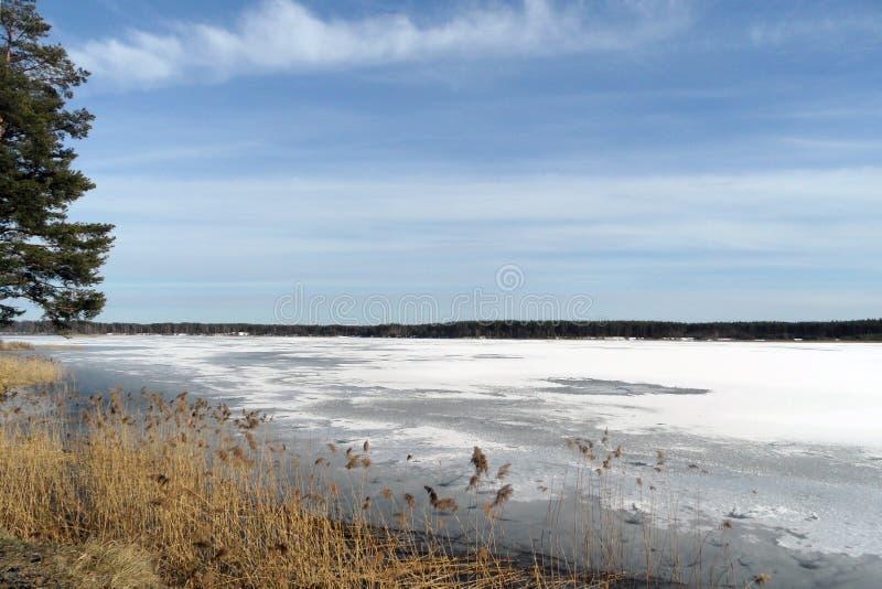 Frühlingsbucht Bank im Wald mit Überresten von schmelzenden Eisschollen mit Schnee am sonnigen Tag lizenzfreie stockfotos