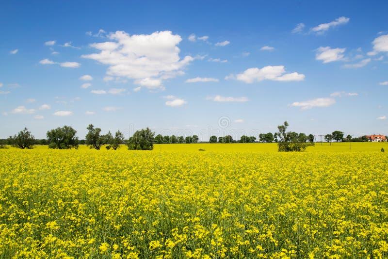 Frühlingsdorflandschaft stockbild